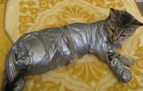 duct_tape_cat_600